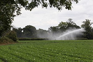A Drought Is Officially Declared In Parts Of East Anglia