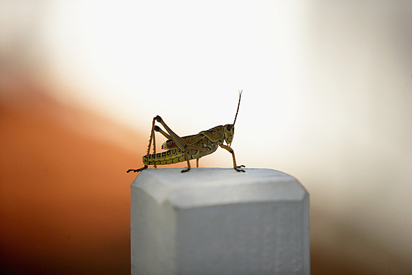 sign of fall in texas crickets are everywhere