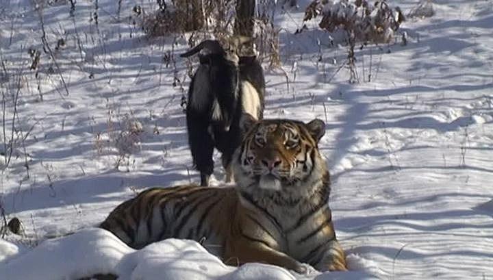Primorsky Safari Park