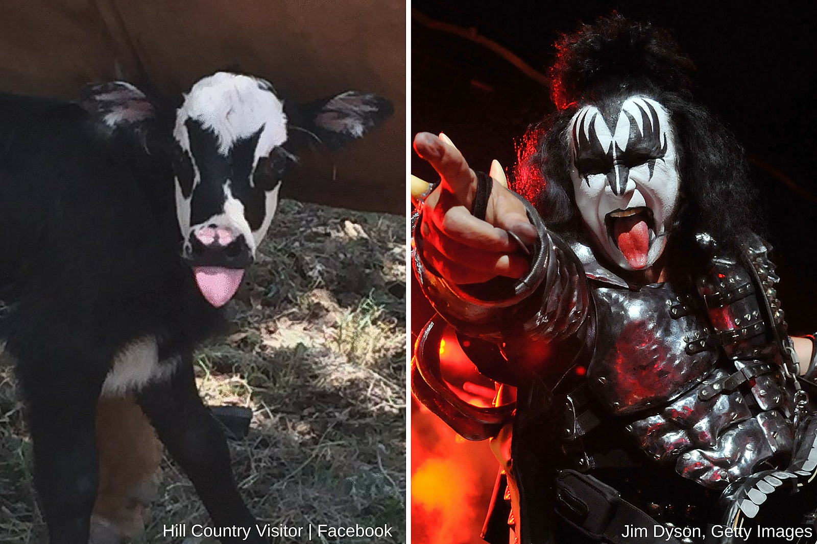Kiss and Goat